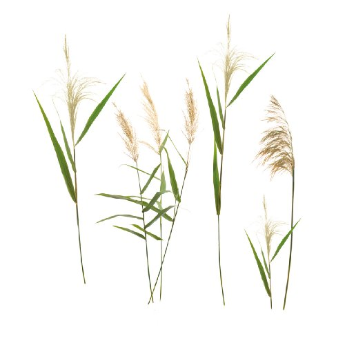 Eurographics DS DT7044 Wall Sticker Wall Grasses 50 x 70 cm