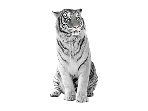 Graz Design 641006_40 Tiere Asien: Tiger Colored Eyes_78x40cm