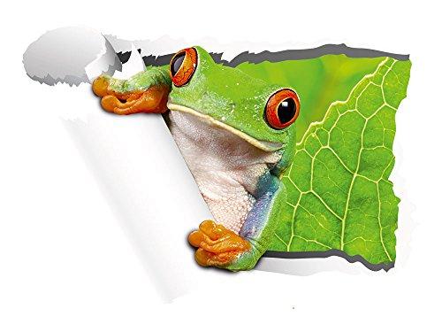 Kinderzimmer Tapete M?rchen : Wandaufkleber Wohnzimmer Kinderzimmer Tapete Frosch (Gr??e=42x30cm
