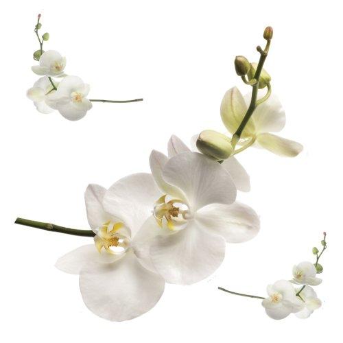 Wandtattoo Orchidee lila, weiß