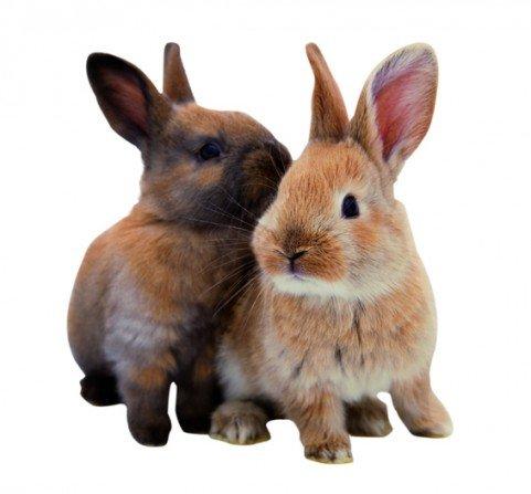 wandtattoo hase hoppel h schen kaninchen. Black Bedroom Furniture Sets. Home Design Ideas